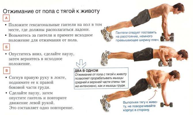 Какие мышцы работают во время отжиманий от пола? различные варианты упражнения