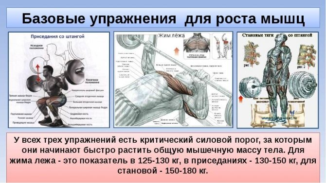 План питания для мужчины-мезоморфа на набор мышечной массы