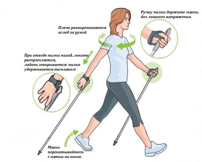 Скандинавская ходьба с палками: техника ходьбы, как правильно ходить, дышать, инструкция, правила