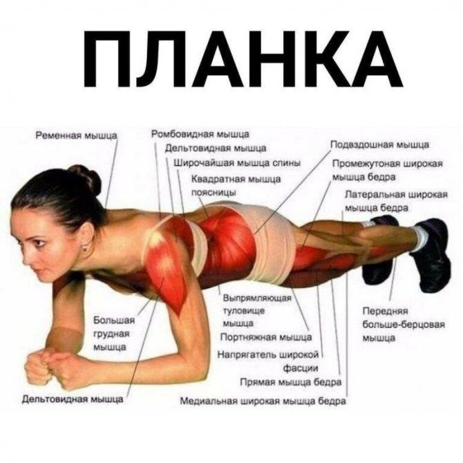 Упражнение планка: как выполнять, польза и вред. 45 вариантов планок + готовый план тренировок!