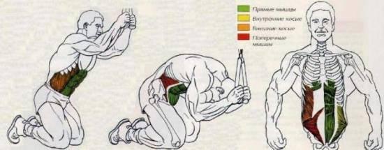 Сгибание рук на верхнем блоке на бицепс: техника выполнения упражнения, правила безопасности, распространенные ошибки новичков и полезные рекомендации