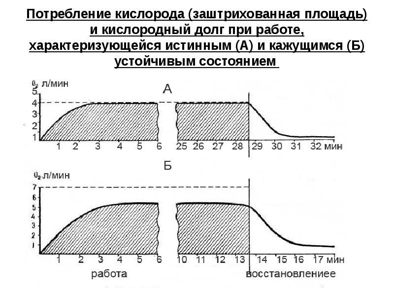 3.2.4. кислородный запрос и кислородный долг