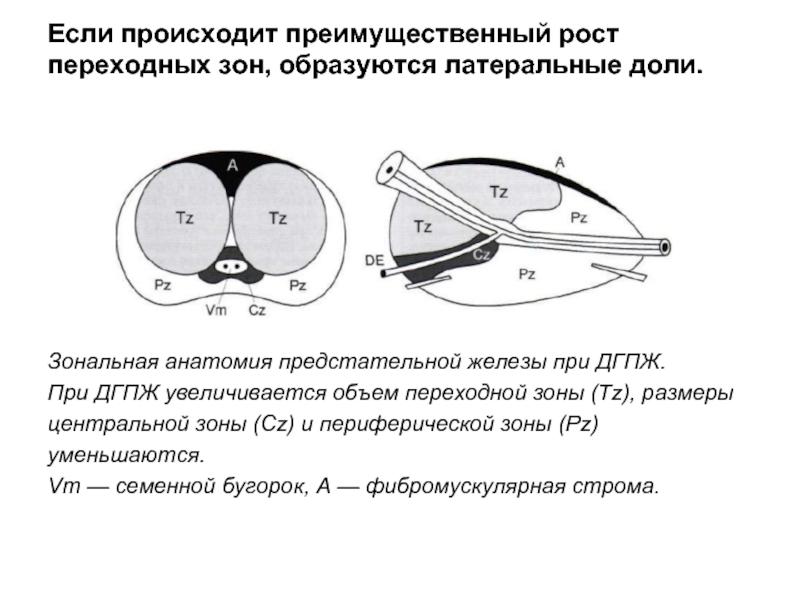 Отличие простатита от аденомы простаты:какая разница в причинах и симптомах,чем отличается лечениеаденомы предстательной железы от простатита | prostatitaid.ru