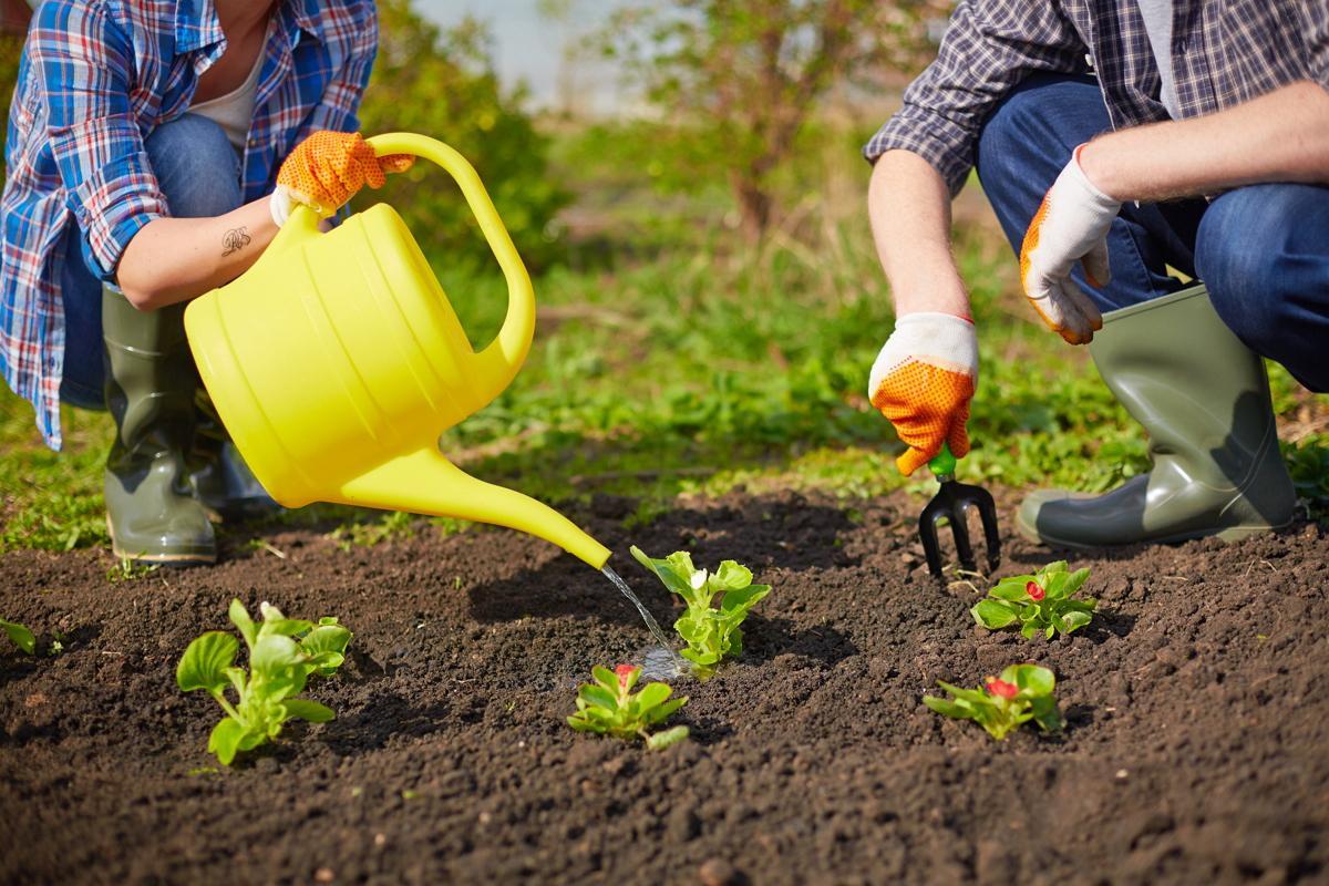 Почему болит спина на даче? как правильно работать в огороде, чтобы не навредить позвоночнику   запитание