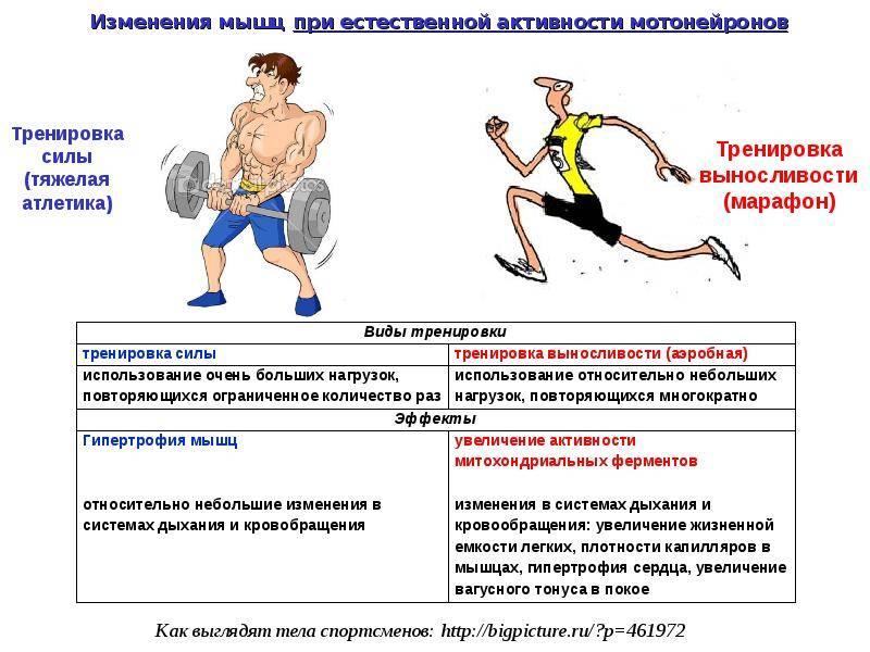 Тренировка бойцов на скоростную выносливость и взрывную силу от максима дедика, силовой тренинг для бойцов