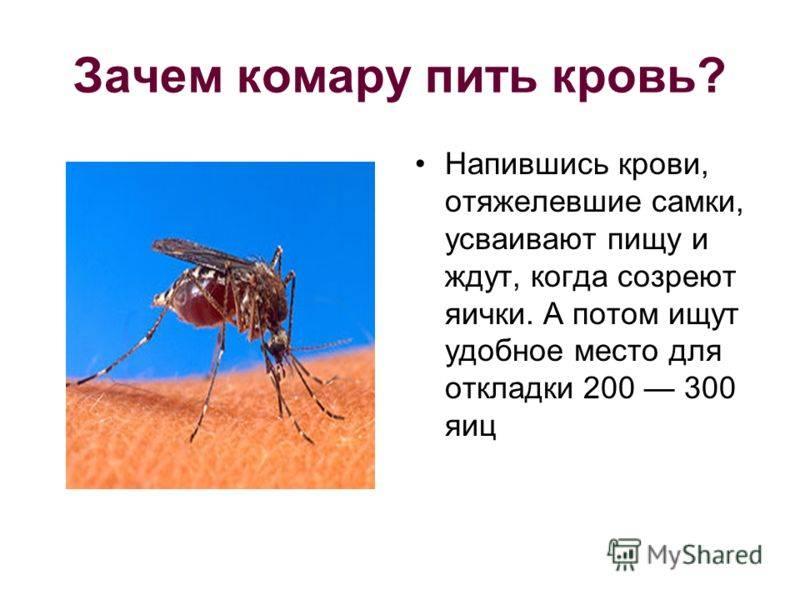 Стала известна самая «вкусная» группа крови для комаров « бнк