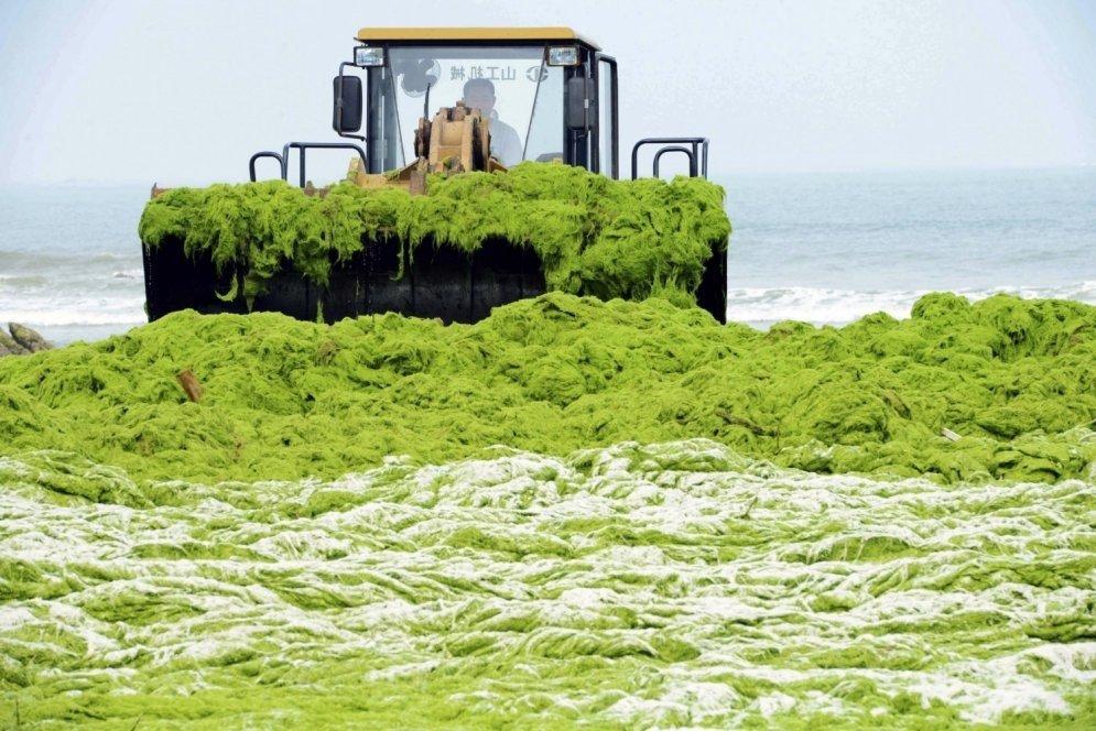Морские водоросли: польза и вред, состав, применение в кулинарии