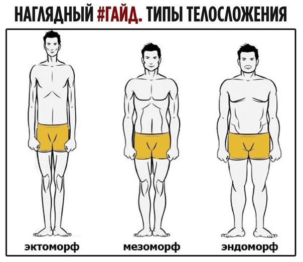 Определение типа телосложения мужчин (эктоморф, мезоморф или эндоморф)   fitbreak! всё о фитнесе и бодибилдинге