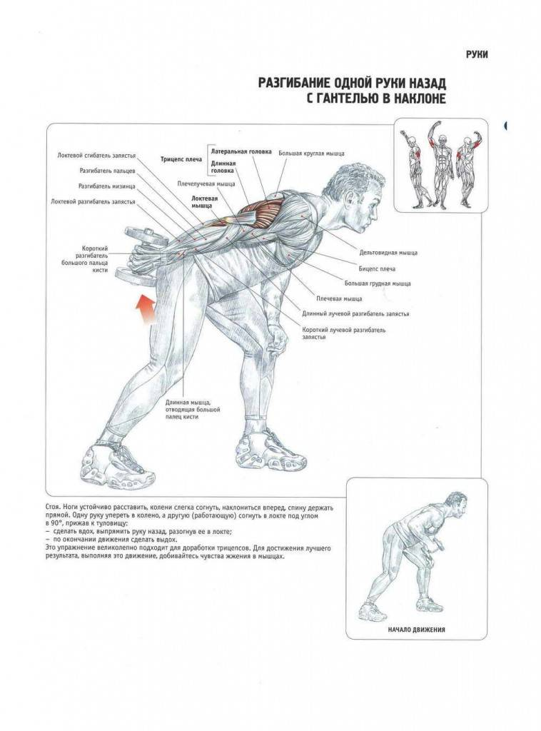 Базовые упражнения на бицепс в тренажерном зале