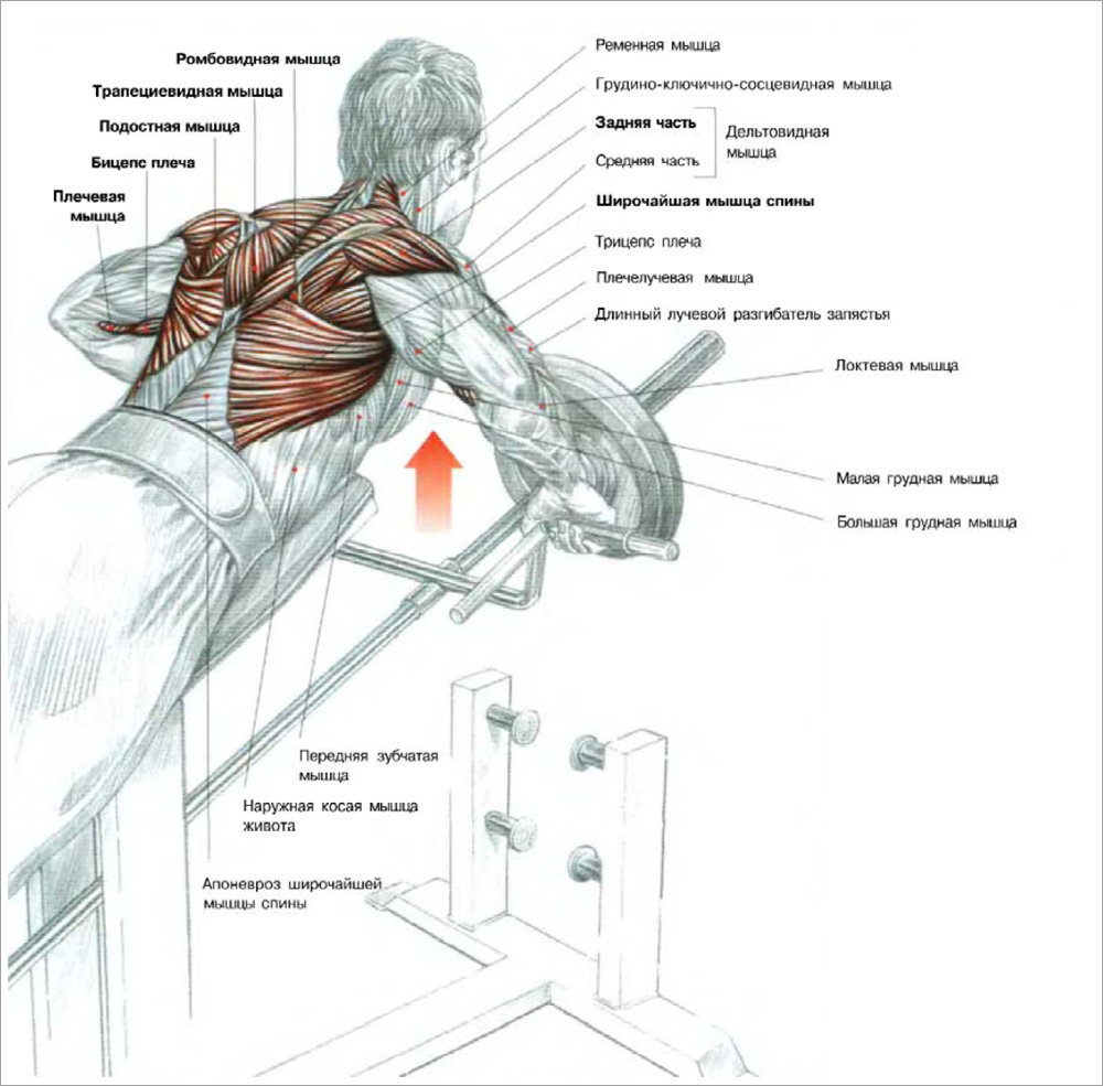 Базовые упражнения на плечи