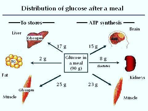 Фитнес-мифы: углеводы и жиры нельзя есть вместе - fitlabs / ирина брехт
