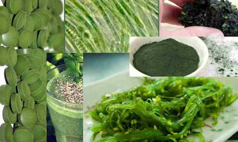 Бурая водоросль (келп) – натуральный источник йода для организма человека. описание растения, его полезные свойства, подборка бадов с iherb