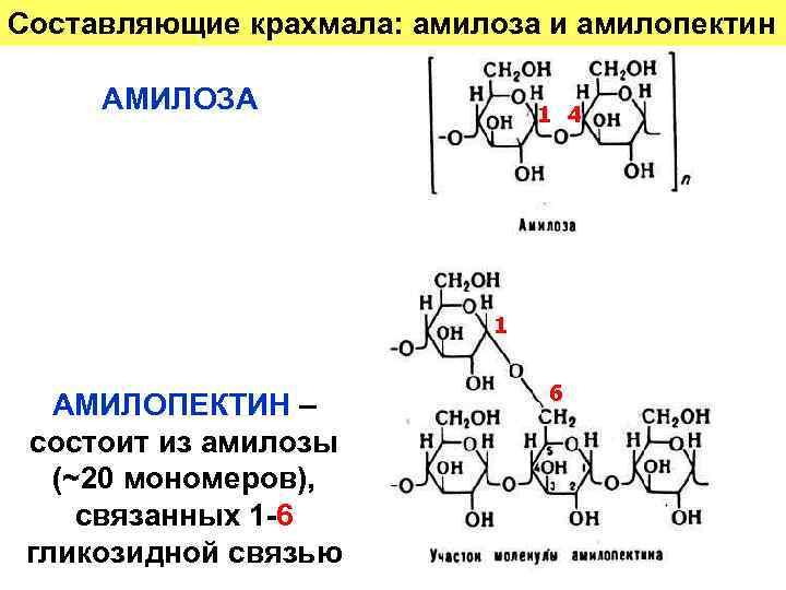 Амилоза и амилопектин: состав, свойства и особенности