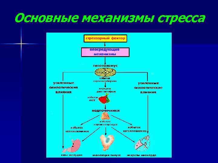 Стресс реакция и катаболические гормоны