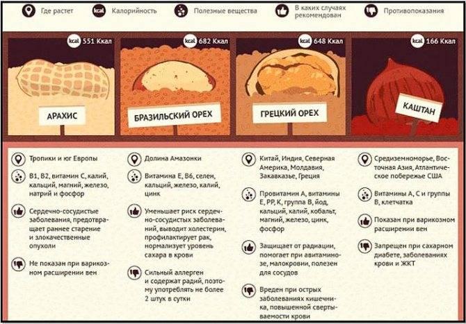 Перевариваются ли грибы в желудке у человека