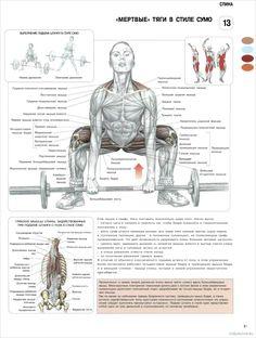 Румынская тяга, мертвая тяга и становая: отличия упражнений друг от друга