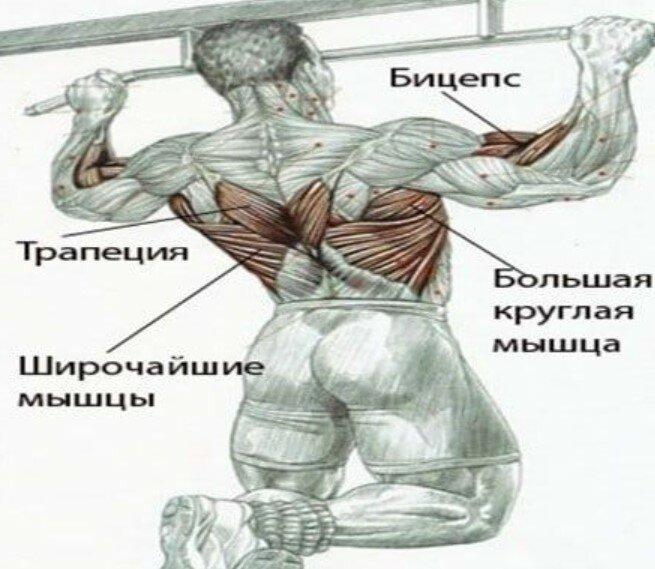 Как правильно и эффективно накачать широчайшие мышцы спины?