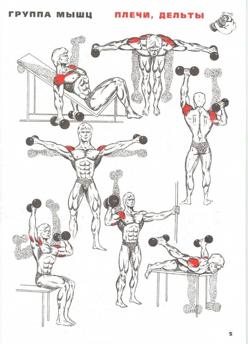 Как накачать массивный бицепс в домашних условиях: упражнения для тренировки бицепсов без веса, с собственным телом и на турнике
