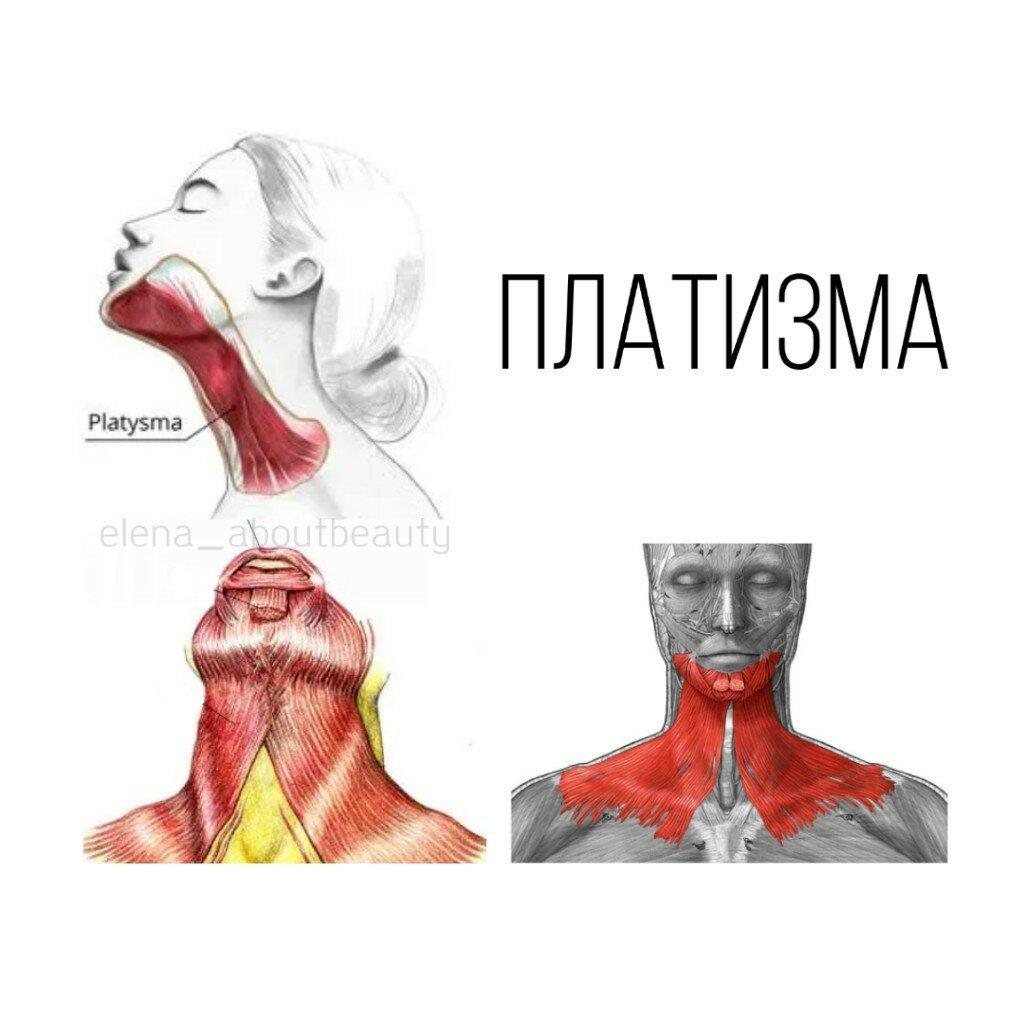 Как укрепить мышцы шеи: подробное описание курса упражнений