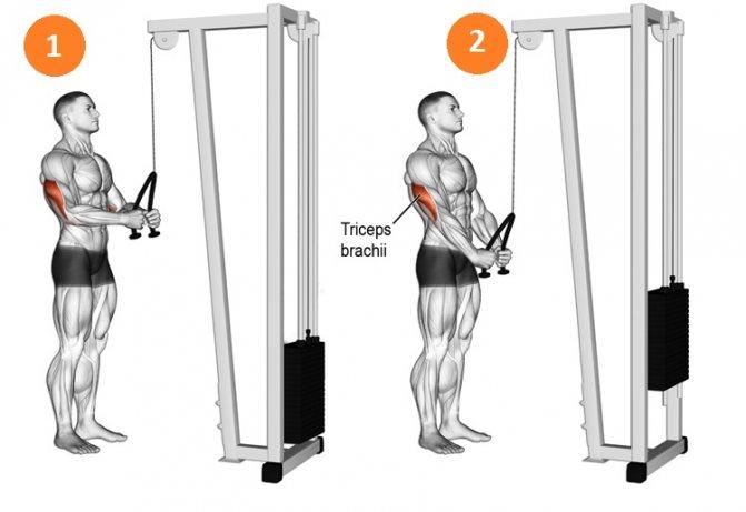 Разгибание рук в наклоне: варианты техники стоя и сидя с гантелью