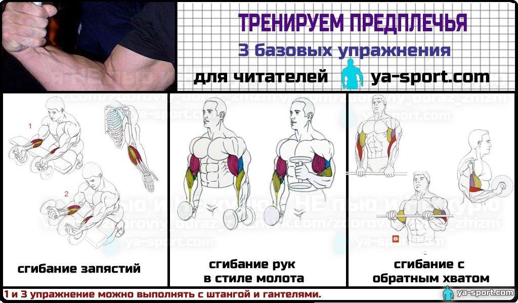 Упражнения на предплечья