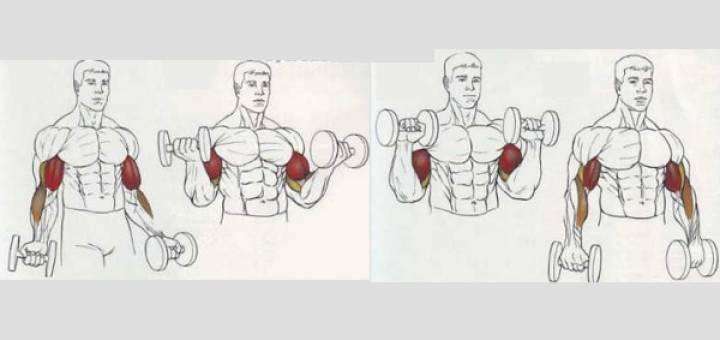 Сгибание зоттмана — что это за упражнение, техника выполнения с гантелями