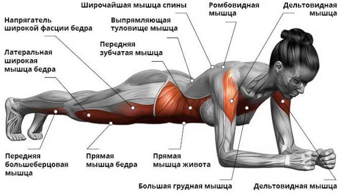 Что стоит тренировать каждый день, чтобы быстрее накачать мышцы