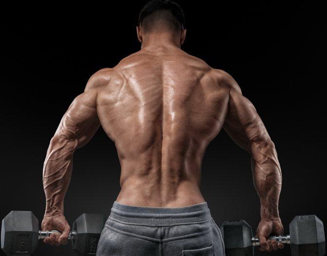 Упражнения для мышц спины в зале: 8 эффективных упражнений