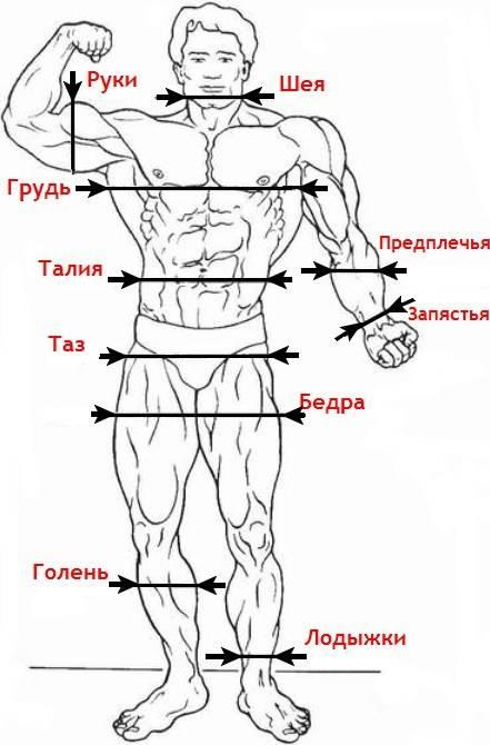 Как правильно делать замеры тела | фитнес-тренер онлайн