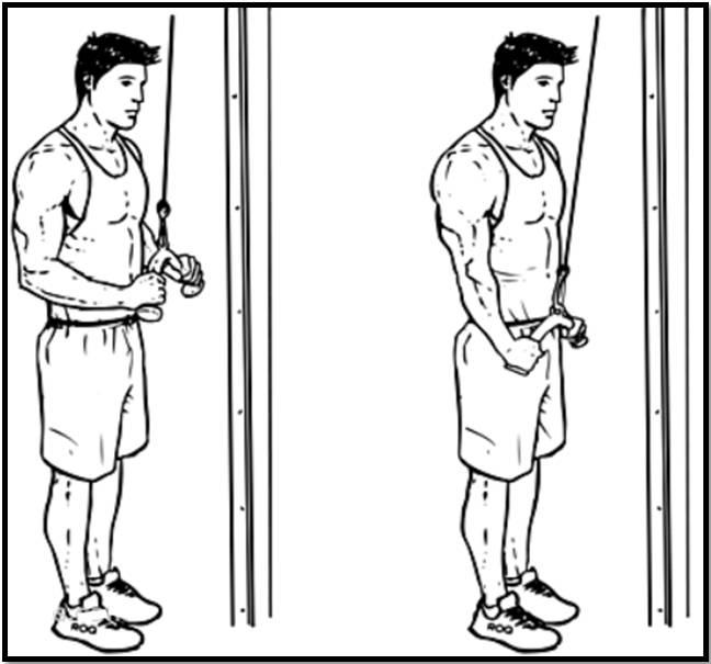Как делать разгибание рук для трицепса на верхнем блоке стоя? расскажем!