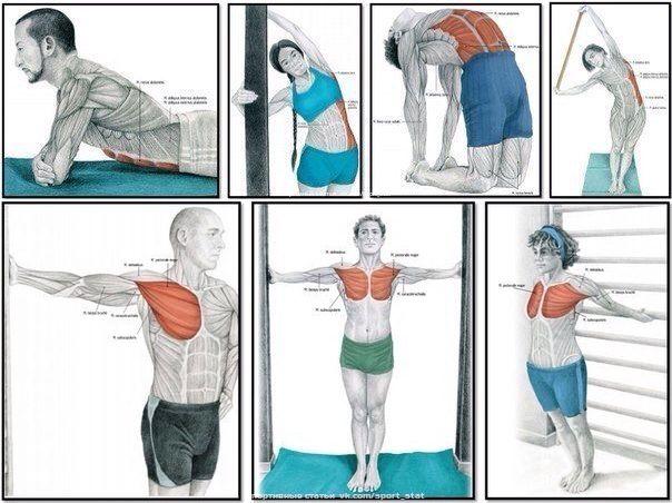 Как накачать грудь девушке: упражнения для мышц груди