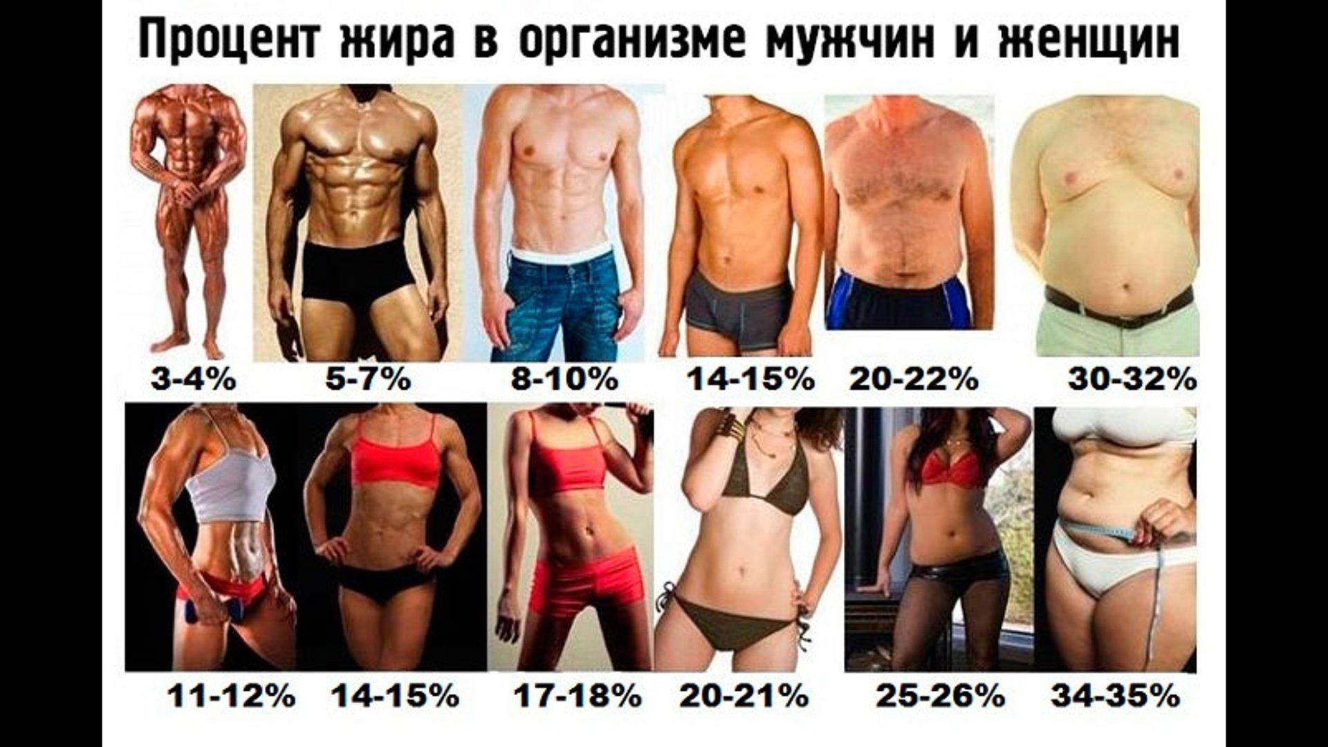 Какой нормальный процент жира в организме для здоровья?