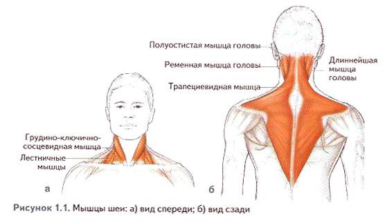 Болит голова и сзади шея: причины, диагностика и методы лечения