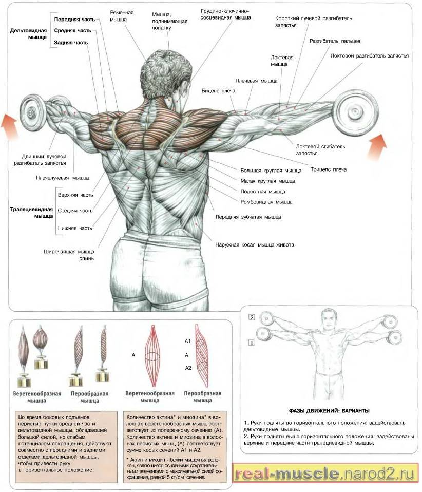 Упражнения на плечи для девушек для зала и дома