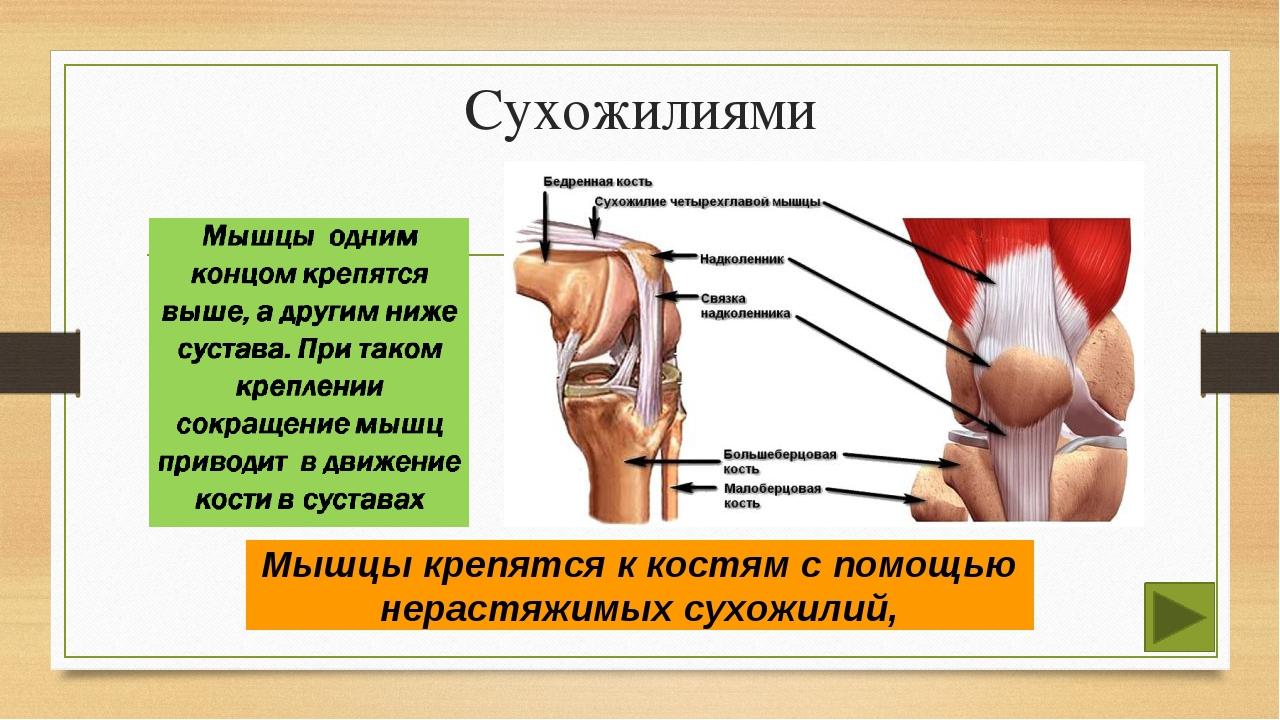Как укрепить связки и сухожилия? секрет силы