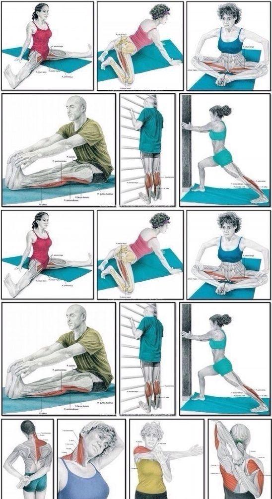 Упражнения для растяжки в домашних условиях, для начинающих и профи
