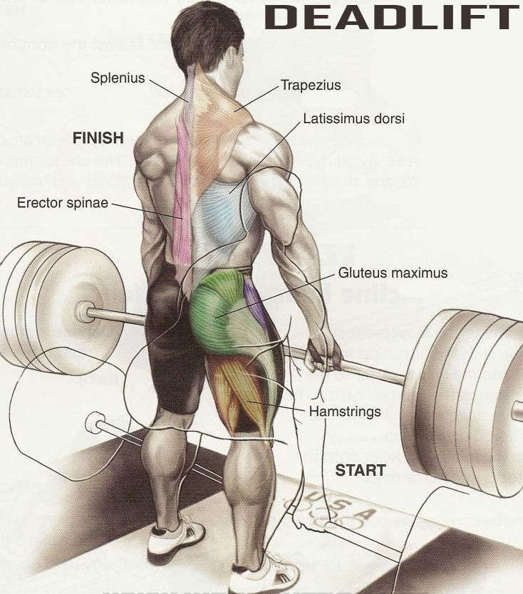 Становая тяга сумо – техника выполнения и работа мышц
