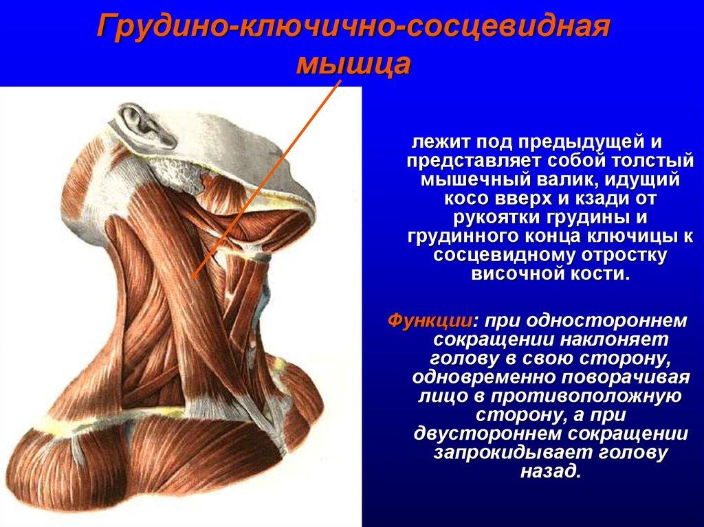 Топ-4 базовых упражнения для укрепления мышц шеи дома и в тренажерном зале