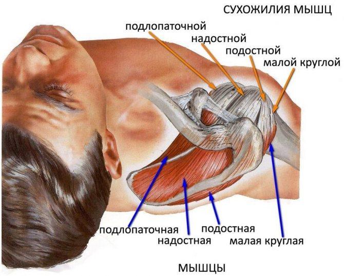 Мышечное напряжение: как снять боли? - спазмы(судороги)