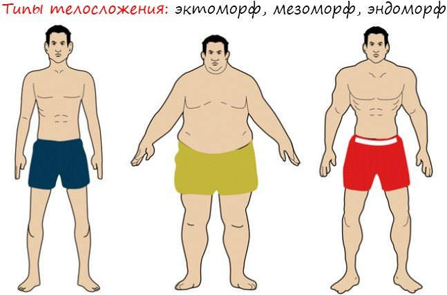 Эндоморф — тренировки, питание и диета для сжигания жира