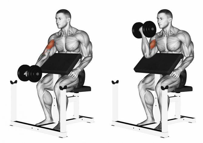 Сгибание рук со штангой: варианты и техника выполнения упражнения стоя, сидя и на скамье скотта
