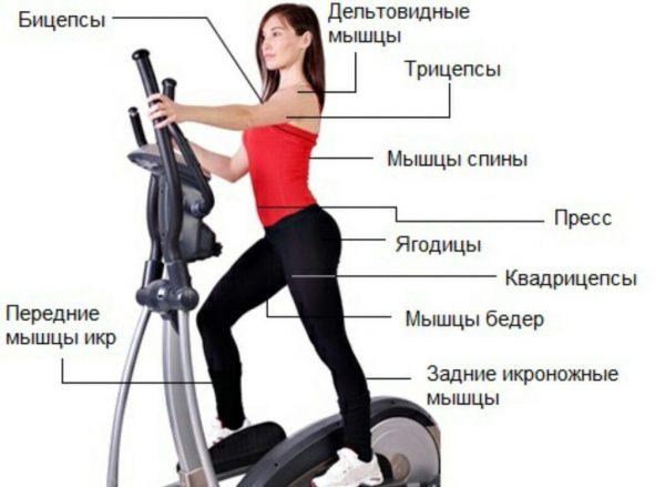 Как правильно заниматься на эллиптическом тренажере, чтобы похудеть. эллипсоид для похуденияwomfit