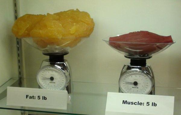 Как похудеть: 4 простых и важных факта – зожник  как похудеть: 4 простых и важных факта – зожник