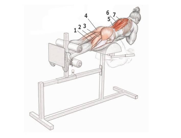 Гиперэкстензия – тренажер для укрепления задней поверхности тела
