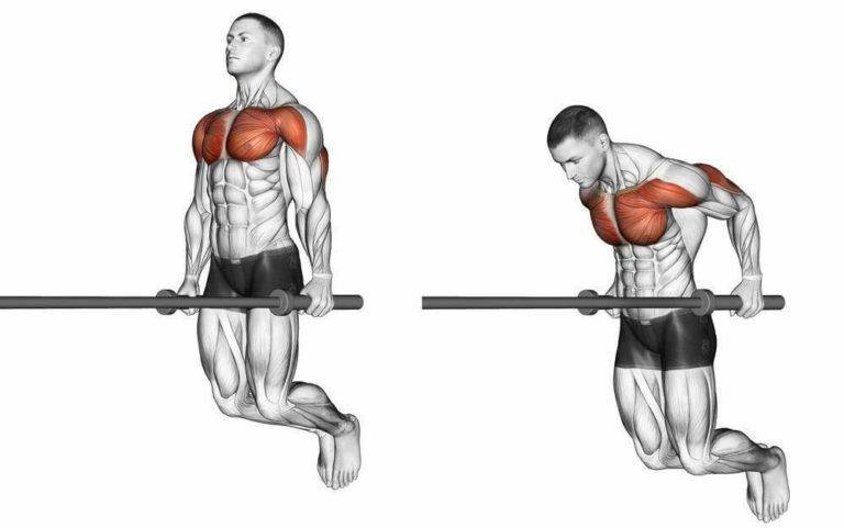 Отжимания на брусьях на грудь и мышцы трицепса - техника выполнения