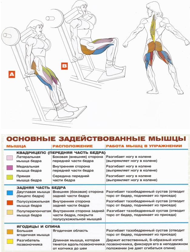 Упражнения на бицепс бедра: как накачать мышцы в тренажерном зале или домашних условиях