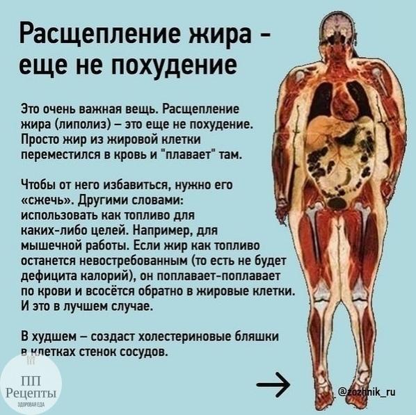 Как запустить процесс жиросжигания в организме? сжигание жира: основные правила