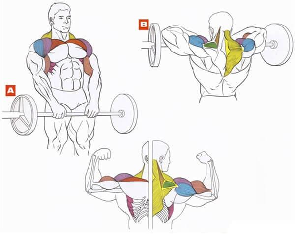 Как правильно накачать трапецию. тренируем трапециевидные мышцы