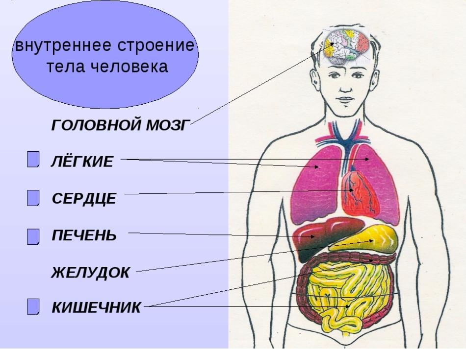 Как интерпретировать рисунок человека