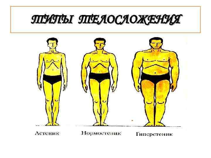 Эктоморф, мезоморф, эндоморф: как определить тип телосложения человека